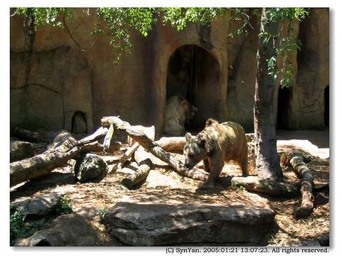 棕熊厉害还是老虎厉害