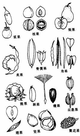 幼儿植物观察记录封面简笔画