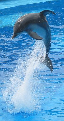 壁纸 动物 海洋动物 鲸鱼 桌面 270_510 竖版 竖屏 手机